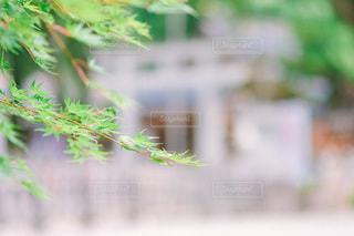 木のクローズアップの写真・画像素材[3515628]