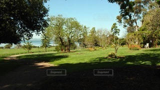 緑豊かな畑の真ん中にある木の写真・画像素材[3566061]