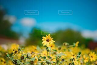 花のクローズアップの写真・画像素材[3692928]