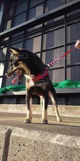 建物の前に座っている犬の写真・画像素材[3518345]