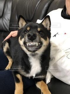 カメラのポーズをとる人と犬の写真・画像素材[3518362]