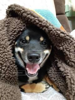 帽子をかぶった犬の写真・画像素材[3518377]