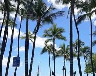 ヤシの木のあるビーチの写真・画像素材[3517927]