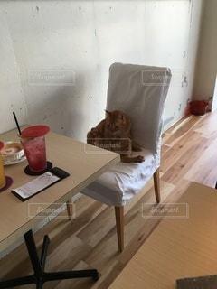 猫の写真・画像素材[3518085]