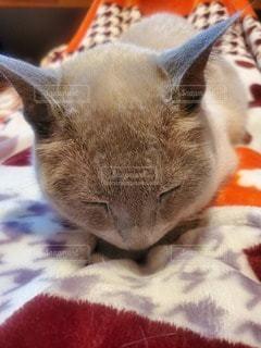 猫のクローズアップの写真・画像素材[3518595]