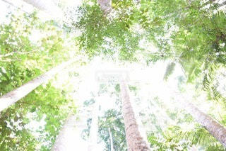 日差しがあふれる森の写真・画像素材[3521700]