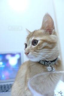 猫のクローズアップの写真・画像素材[3520002]