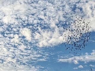 秋の空と鳥の群れの写真・画像素材[3865140]