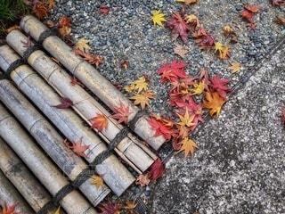 庭に落ちたもみじの葉の写真・画像素材[3904486]
