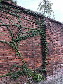 レンガ造りの建物と蔦の写真・画像素材[3521439]