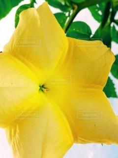 花のクローズアップの写真・画像素材[3541204]