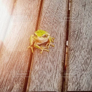 カエルさんです。の写真・画像素材[3677468]