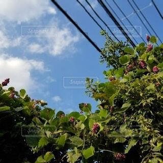 お花と空です。の写真・画像素材[3703854]