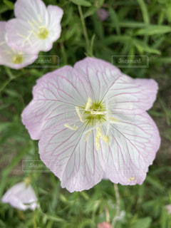 花のクローズアップの写真・画像素材[3522960]