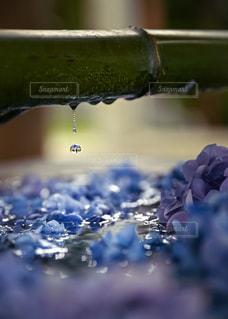 花手水の雫の写真・画像素材[3539851]