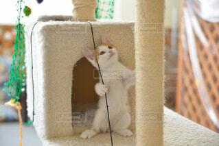 立ち猫の写真・画像素材[3680565]
