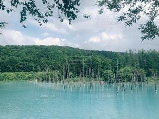 木々に囲まれた湖の写真・画像素材[3526369]
