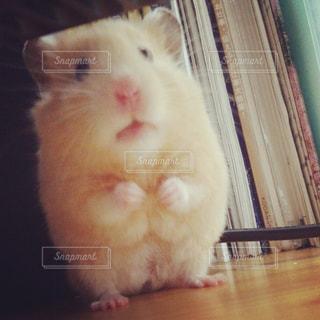 動物の写真・画像素材[149735]