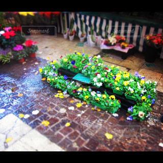 花の写真・画像素材[149757]