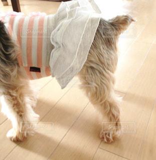 No.150101 犬