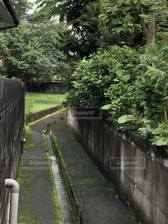 フェンスの側に木がある道の写真・画像素材[3527898]