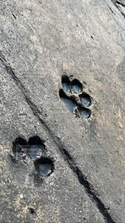 猫の足跡の写真・画像素材[3528050]