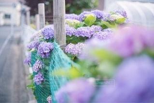 花のクローズアップの写真・画像素材[3532976]