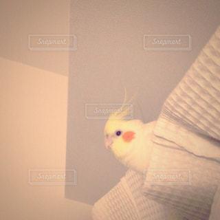 鳥の写真・画像素材[149617]