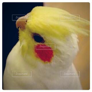 鳥の写真・画像素材[149618]