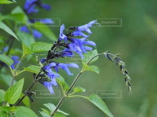 草花の写真・画像素材[4447968]