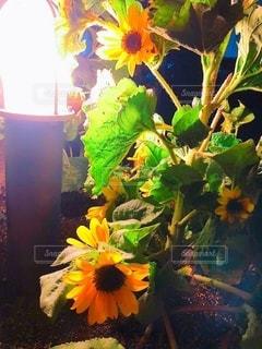 夜の花壇の写真・画像素材[3542361]