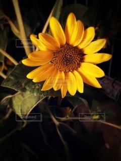 花のクローズアップの写真・画像素材[3542360]