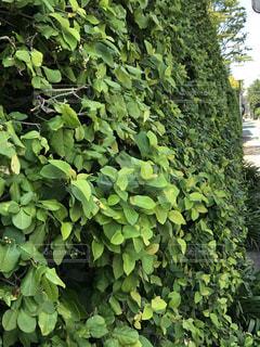 庭の緑の植物の写真・画像素材[3570611]