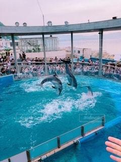 水のプールで泳いでいるイルカの写真・画像素材[3632861]