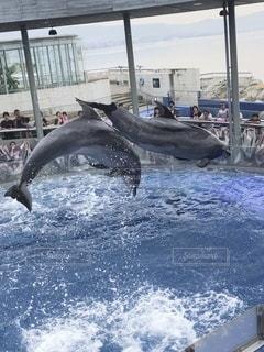 水上の動物の写真・画像素材[3632866]