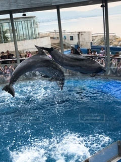 水の中を泳ぐ動物の写真・画像素材[3632869]