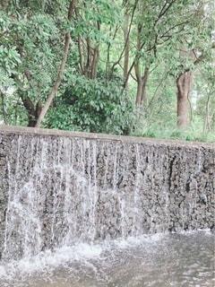 背景に木々のある滝の写真・画像素材[3641282]