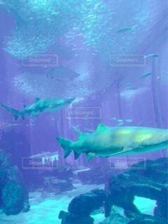 サメの写真・画像素材[3829577]