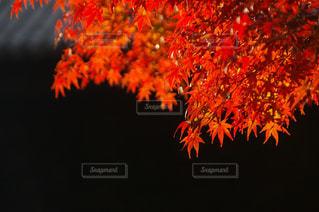京都 嵐山にての写真・画像素材[2768770]