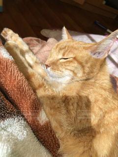 日向ぼっこする猫の写真・画像素材[3542952]