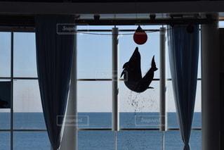 イルカの写真・画像素材[3542970]