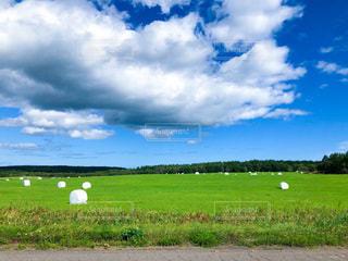 青空の牧草地の写真・画像素材[3599564]