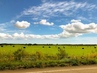 道路から見た北海道の牧草地の写真・画像素材[3601631]