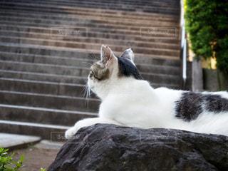 岩の上に座っている猫の写真・画像素材[3578510]