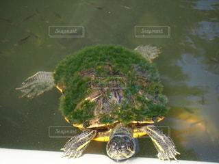池とカメの写真・画像素材[3592928]