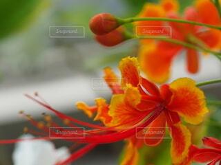 赤い花のクローズアップの写真・画像素材[3682333]