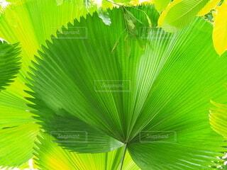 綺麗な葉っぱの写真・画像素材[3682430]