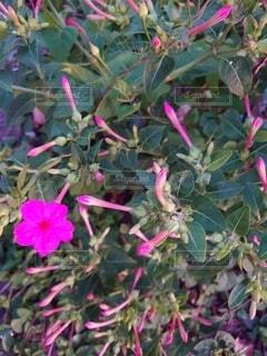 植物の上のピンクの花の写真・画像素材[3625077]