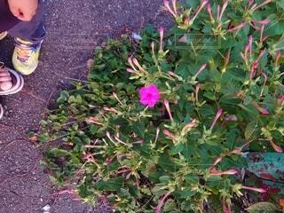花園のクローズアップの写真・画像素材[3625078]