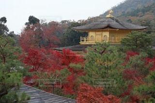 秋の金閣寺の写真・画像素材[3546443]